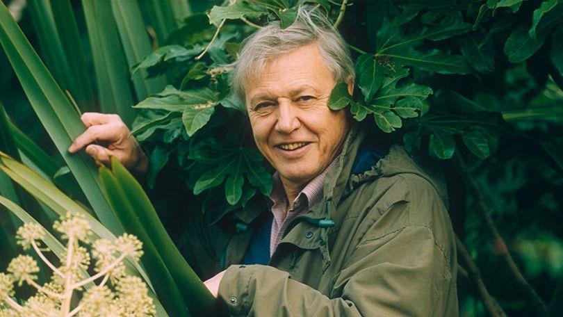Qui est David Attenborough ?