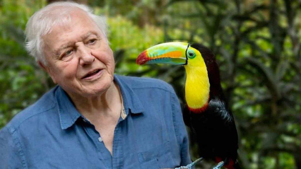 David Attenborough: A 94ans, il bat le record sur Instagram!