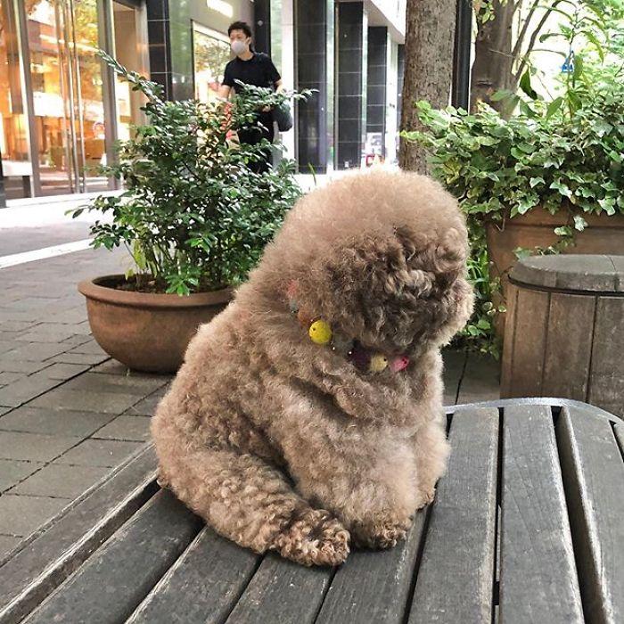 Le chien Kokoro fait réagir ses fans avec son visage d'humain