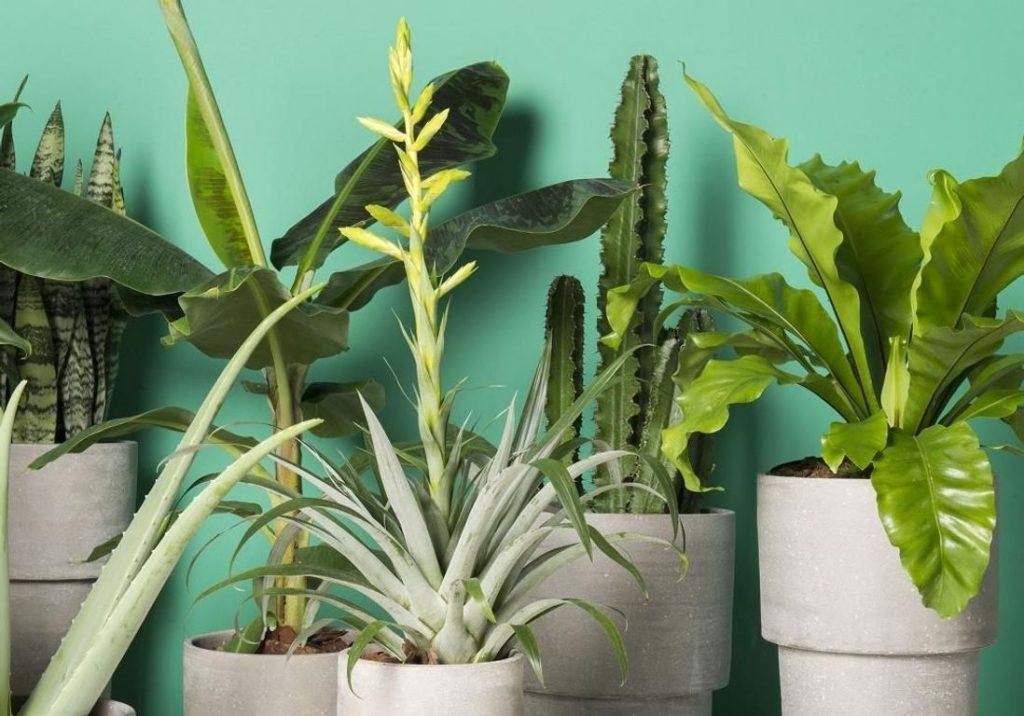 6 plantes à adopter au bureau pour un lieu de travail vert