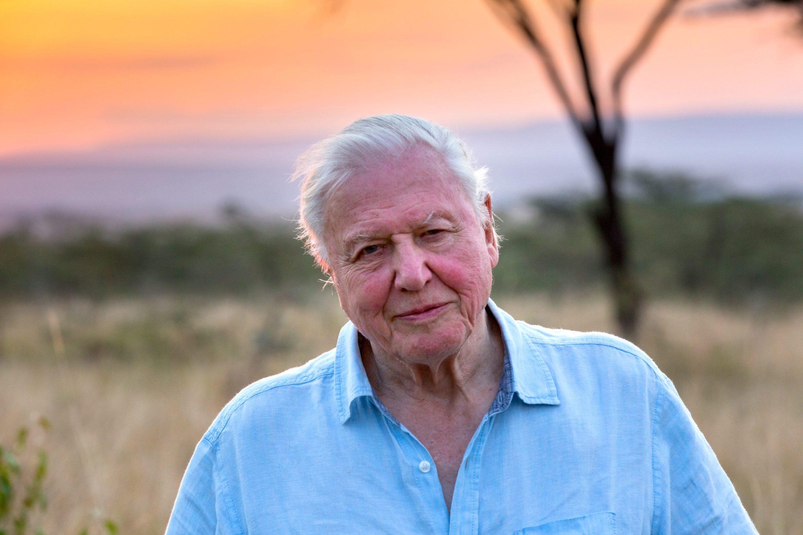 David Attenborough bat des records sur Instagram