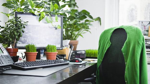 6 plantes faciles à entretenir pour le bureau