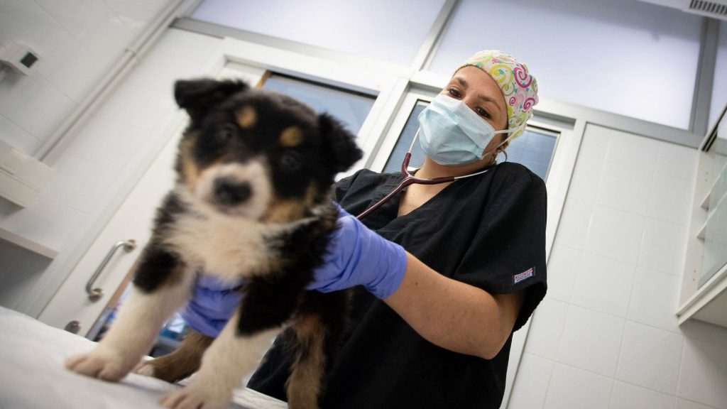 Un vaccin destiné à des chiens !