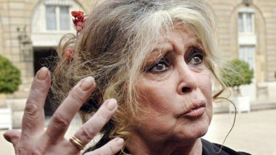 """Brigitte Bardot : """"Allez-vous faire foutre"""". Le coup de gueule de la star."""