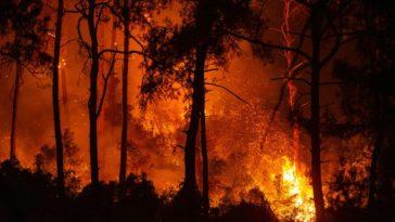 Turquie : Pires incendies de forêt depuis des décennies